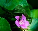 Flower and Bee-